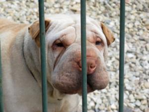 Innerer Schweinehund versus Komfortzone